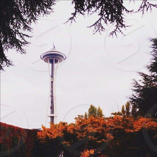 seattle space needle in the fall  photo