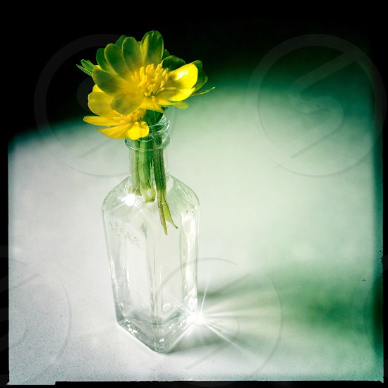 yellow flower on a glass bottle photo