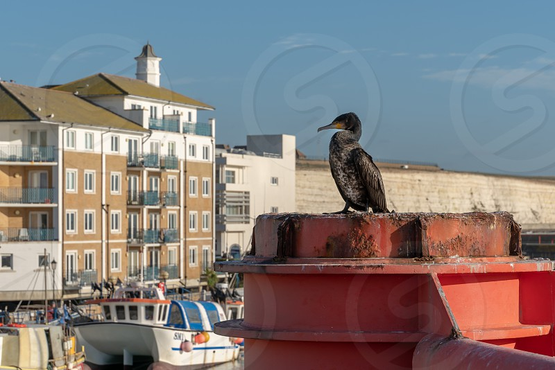 BRIGHTON SUSSEX/UK - JANUARY 8 : Cormorant standing on a red structure at the Marina in Brighton Sussex on January 8 2019 photo