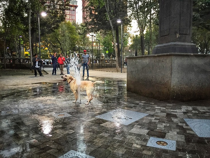 dog; dogs; pet; pets; fun;fountain; playing; wet; happy; happiness  photo