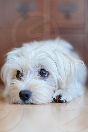 white small sized dog photo