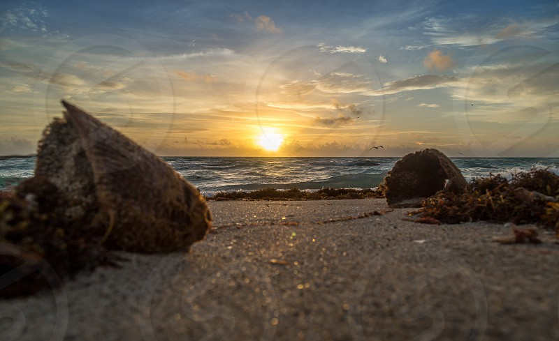 A Miami Beach sunrise with sponges in the foreground. photo