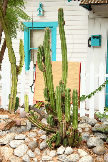 cactus house blue green window spanish stone wood white natural light vintage exterior   photo