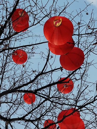 Lantern  lamp  Chinese New Year  photo