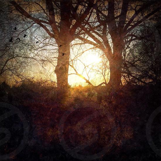 sunrise through trees photography photo