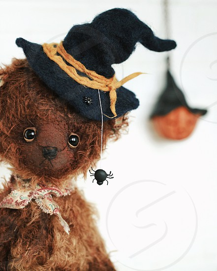 halloween bear teddy costume tradition celebration witch October black hat spider photo