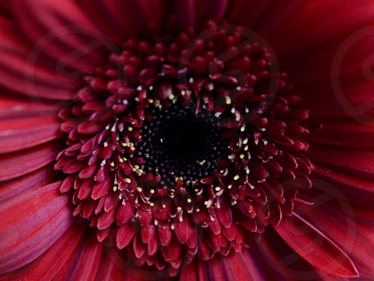 Red flower macro closeup nature flora spring  photo