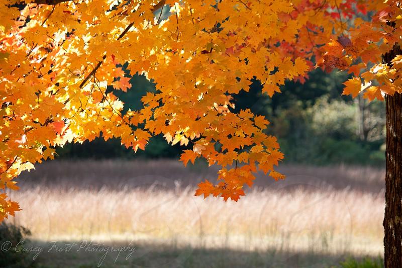 Vermont Fall Foliage  photo