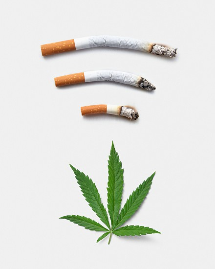 From above green leaf of marijuana placed near smoked out cigarettes against white background photo