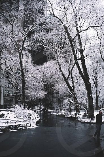 Snow NYC park photo