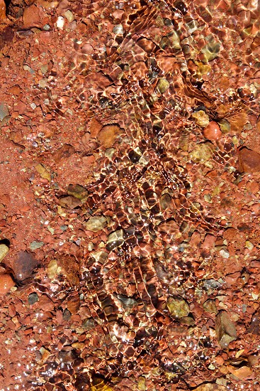 bottom of shallow stream transparent river with red clay and stones photo