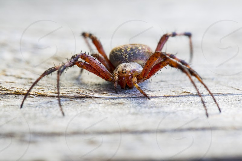 Beautiful Spider Close-up Macro shot photo
