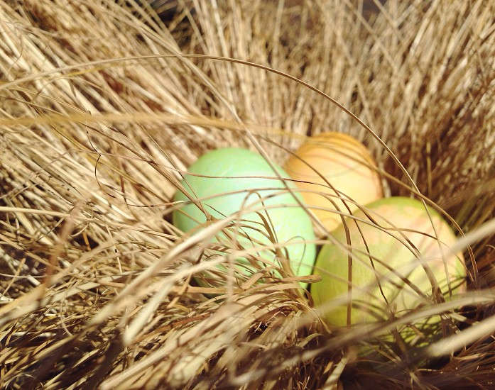green yellow and brown eggs photo