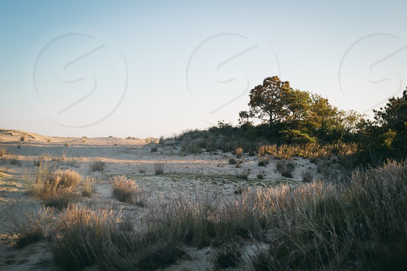 Jockeys Ridge Nags Head North Carolina Outer Banks OBX photo