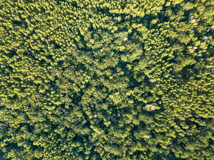 Aerial view from the drone of deciduous green forest in summer time. Natural background as a layout for your ideas. photo
