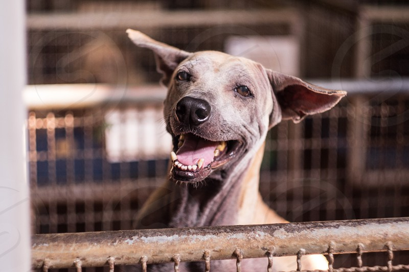 a handdicapped dog smilling in metal fence photo