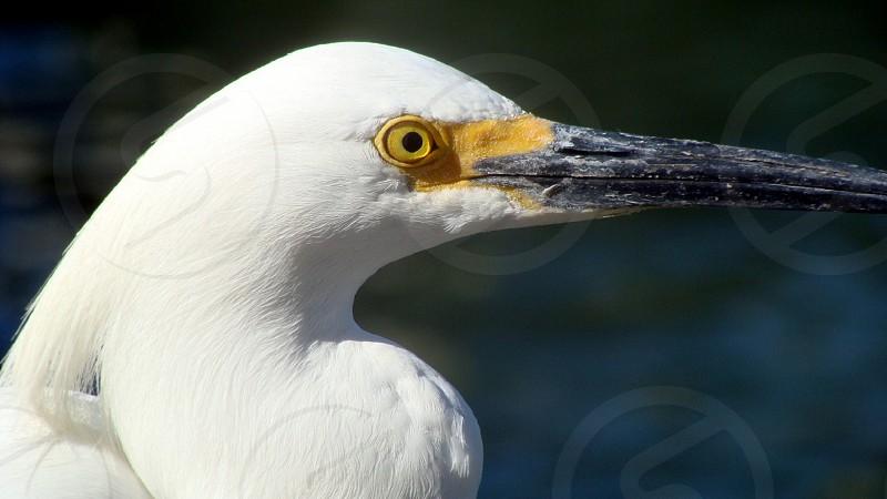 Bird ocean wildlife florida photo