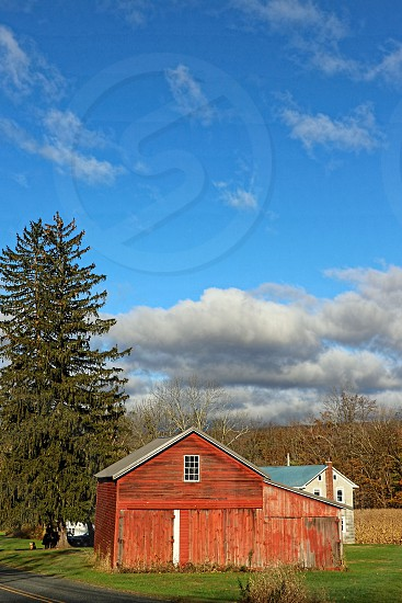 A tall green pine tree grown near a red barn on a country farm under a cloudy sky photo