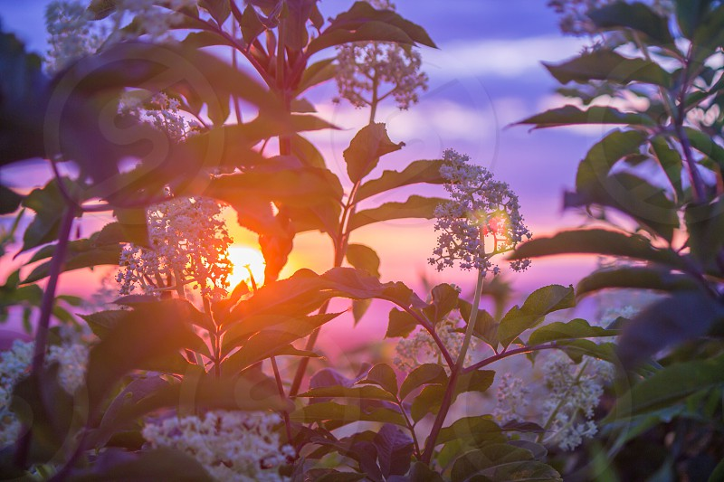 green plant covered by sunset photo