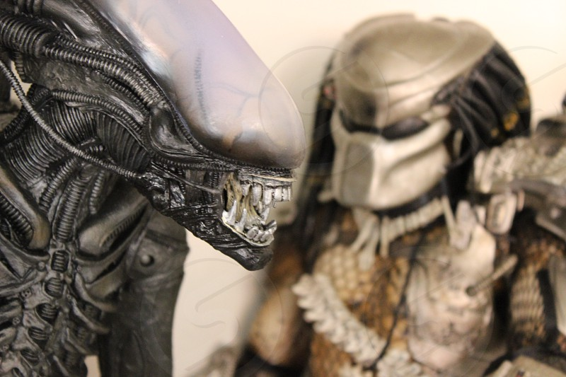 ALIEN VS. PREDATOR photo