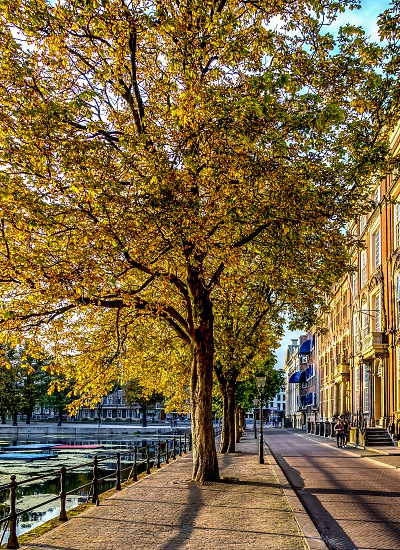 Avenue with trees in old city center of The Hague NL photo