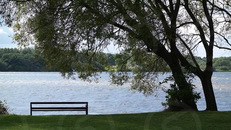 Bench  Lake Tree Tranquillity   photo
