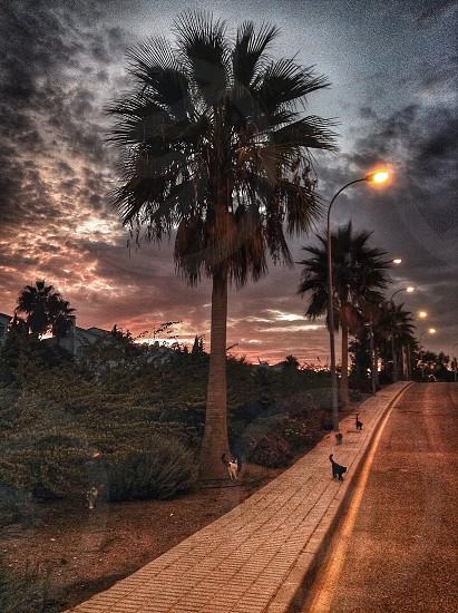 grey street light lighted near palm tree photo