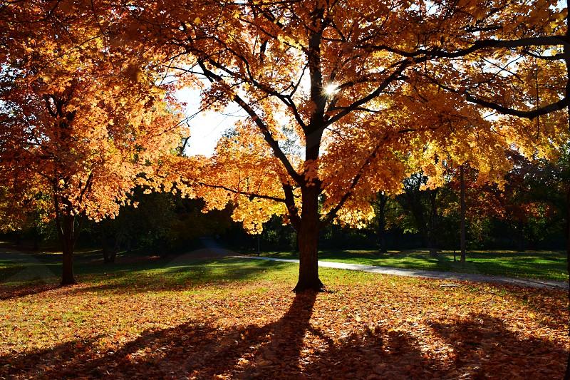 Fall Gold photo