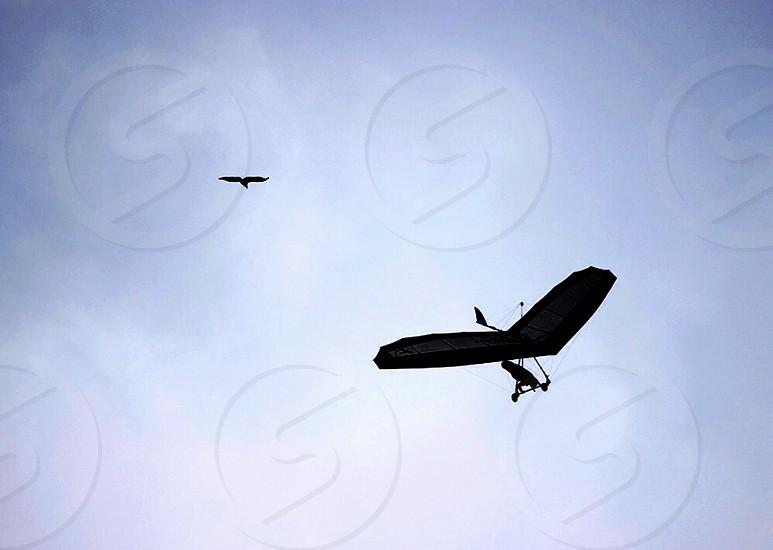 man doing paragliding photo