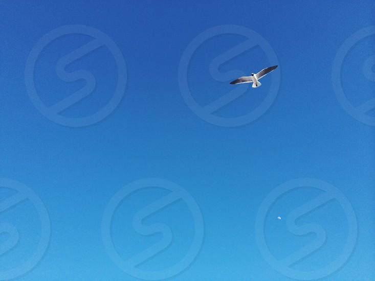 seagull moon beach Delaware summer photo