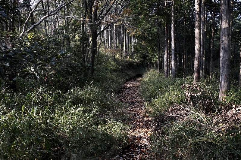 pathway in the woods with foliage photo