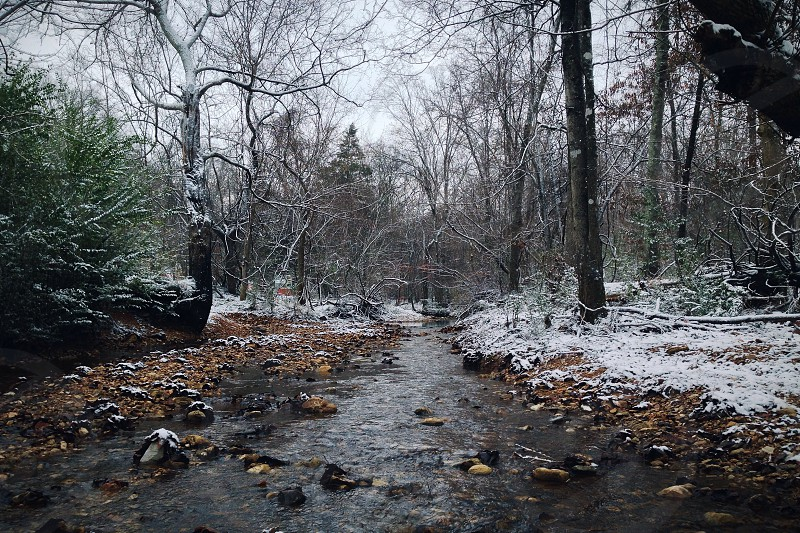 river between snow covered trees photo