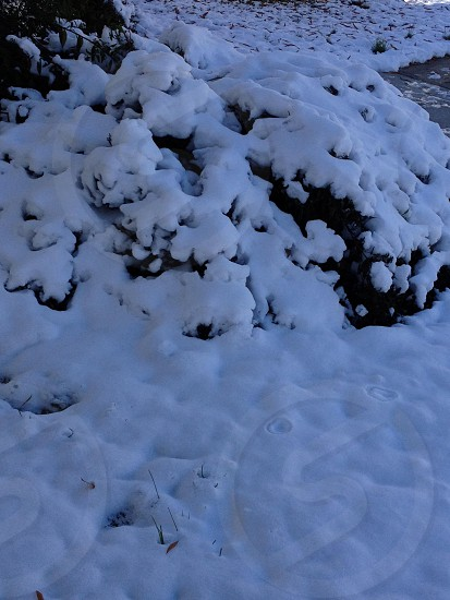Snow covered bush  photo