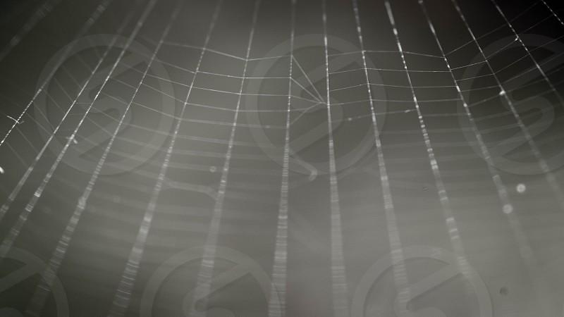 water dew on spiderweb photo