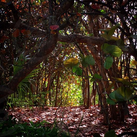 Secret trail through the shoreline woods in Bermuda.  photo