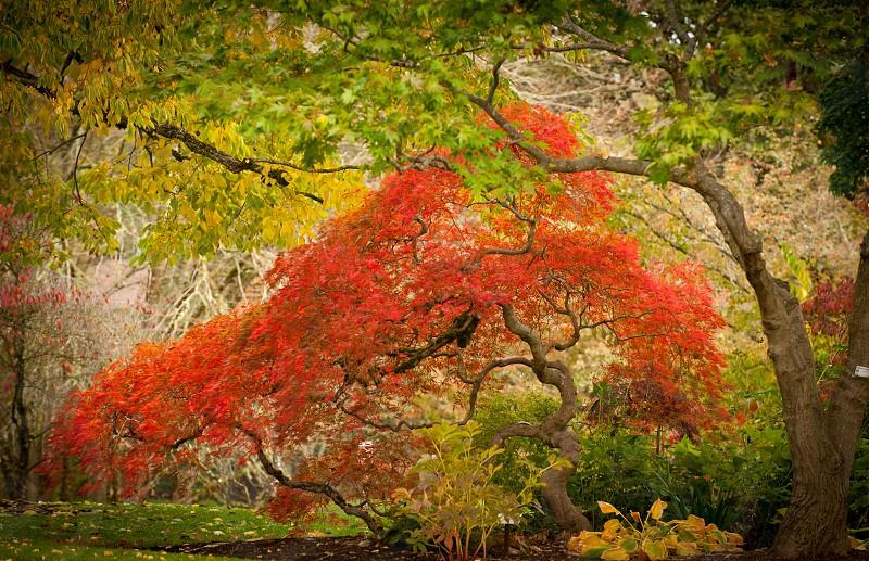 trees photography photo