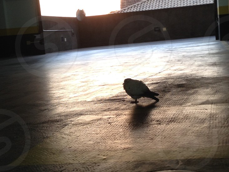 Bird taking a nap at parking lot photo