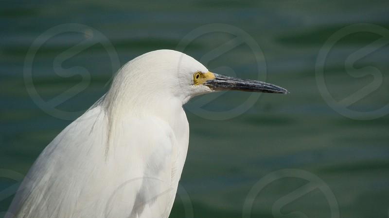 bird ocean sea wildlife florida photo