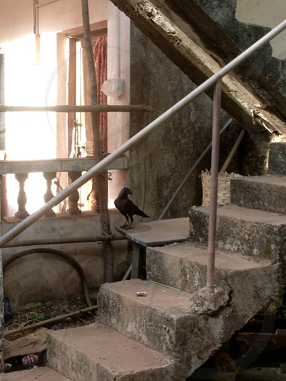 crow stairs building under construction photo