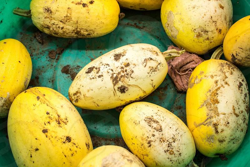 yellow mango photo