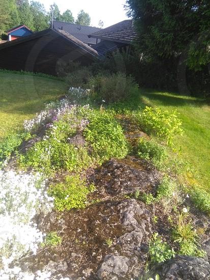garden green photo