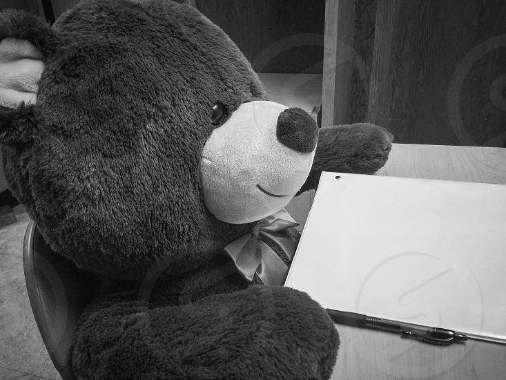 Busy Bear photo