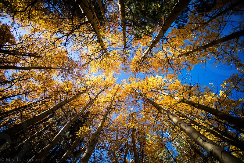 Trees Fall Yellow Sky Sierra Mono Lake Nature Landscape Forrest  photo