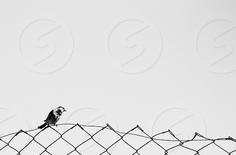 Bird in minimal concept black and white. photo