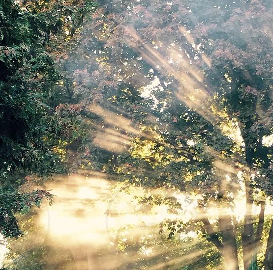 Amazing Rays  photo