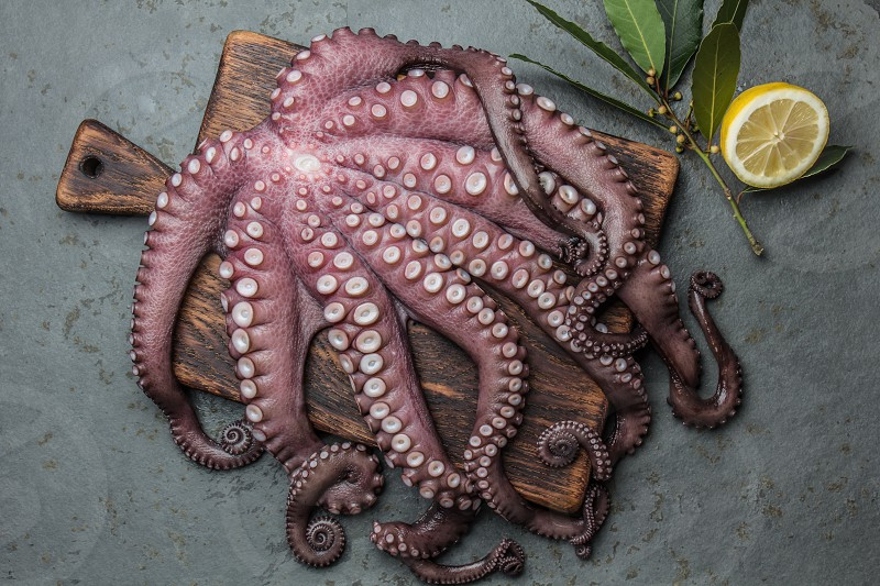 Seafood octopus. Whole fresh raw octopus on wooden board with lemon and laurel gray slate background top view. photo