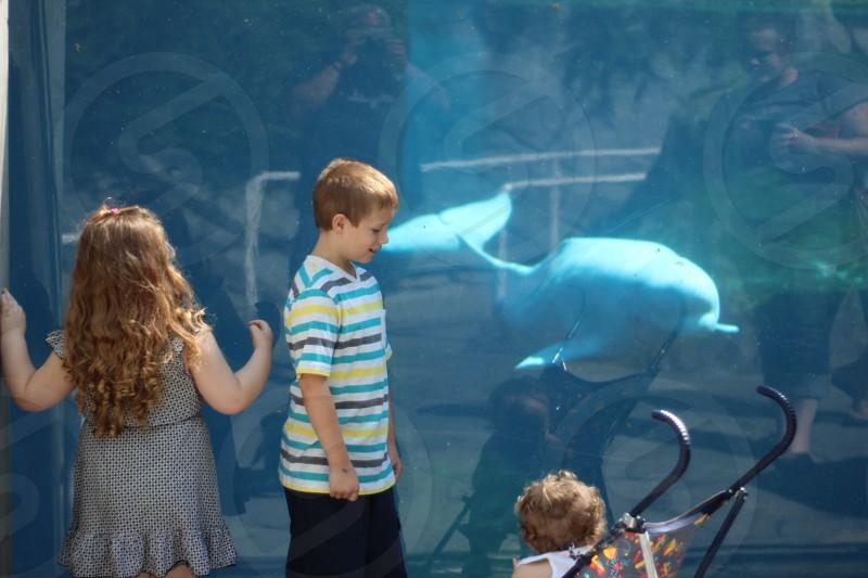Whale aquarium summer family vacation kids photo