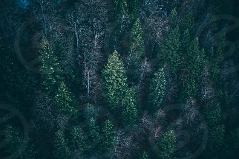 woodsforesturbangreennatureadventurefilmmoody photo
