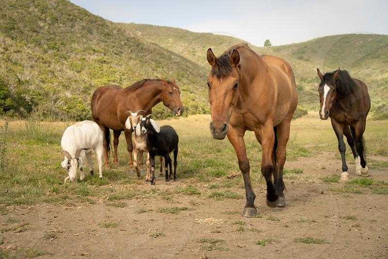 #horses #animals #nature #landscape #california photo