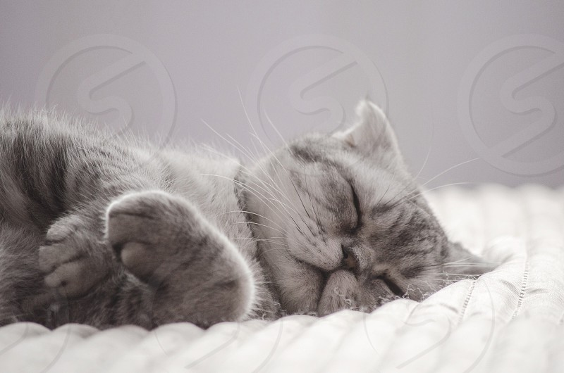 view of grey and white cat photo